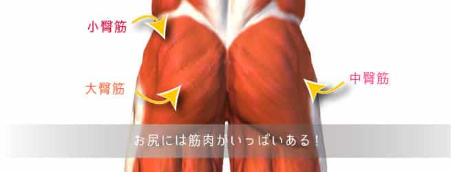お尻の筋肉の種類