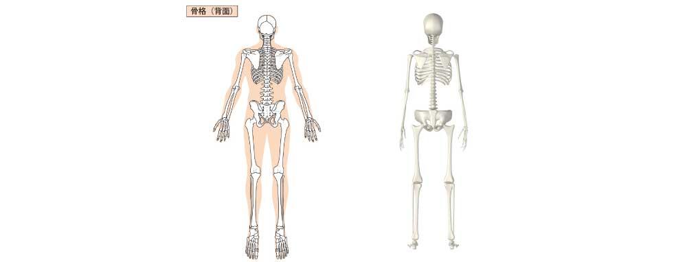 姿勢検査背面