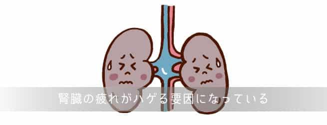 腎臓の疲れと薄毛