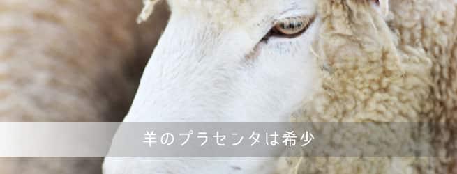 羊のプラセンタ