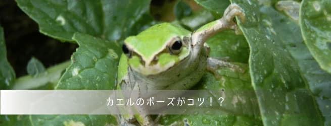 カエルのポーズがコツ