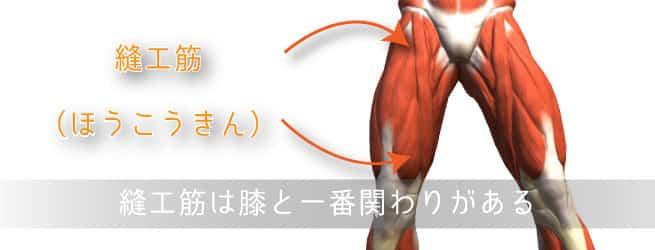 縫工筋と膝