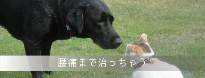 犬猫ストレッチで腰痛予防解消