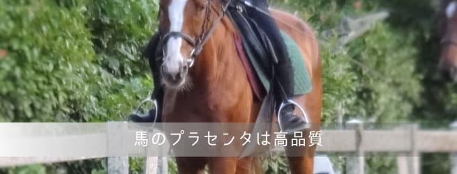 馬のプラセンタ