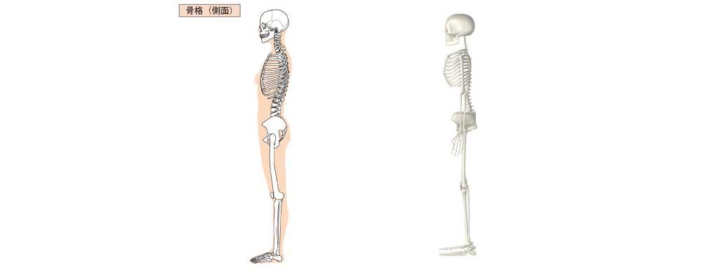 姿勢検査側面